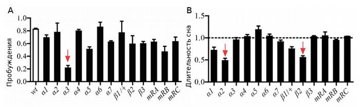 Одни рецепторы к ацетилхолину помогают дрозофилам спать, другие— просыпаться