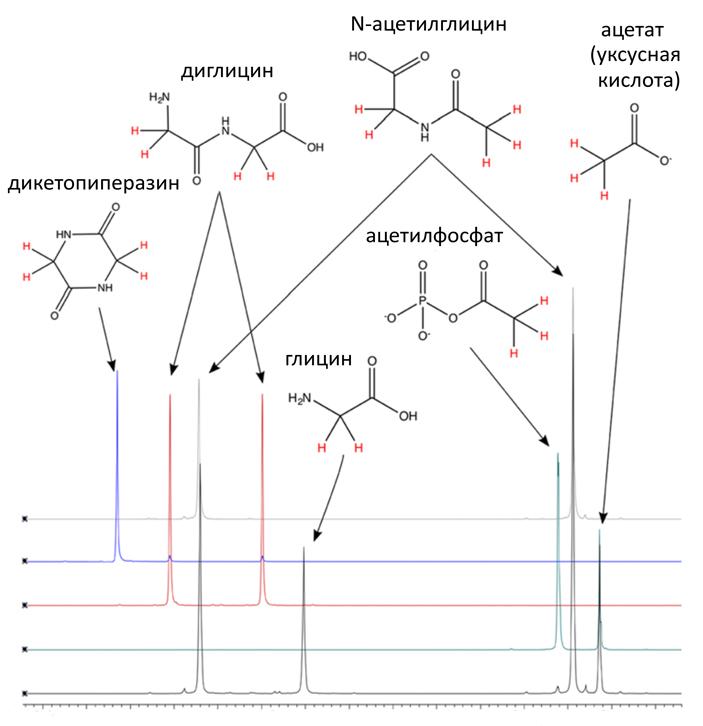 Рис. 3. Ацетилирование глицина ацетилфосфатом