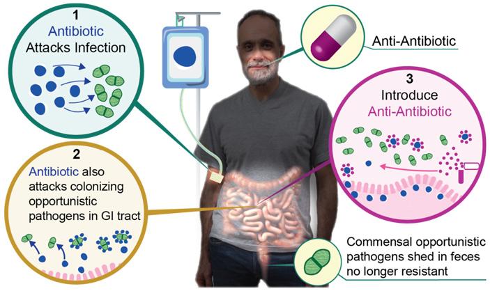Антиантибиотики снижают риск появления резистентных оппортунистических патогенов