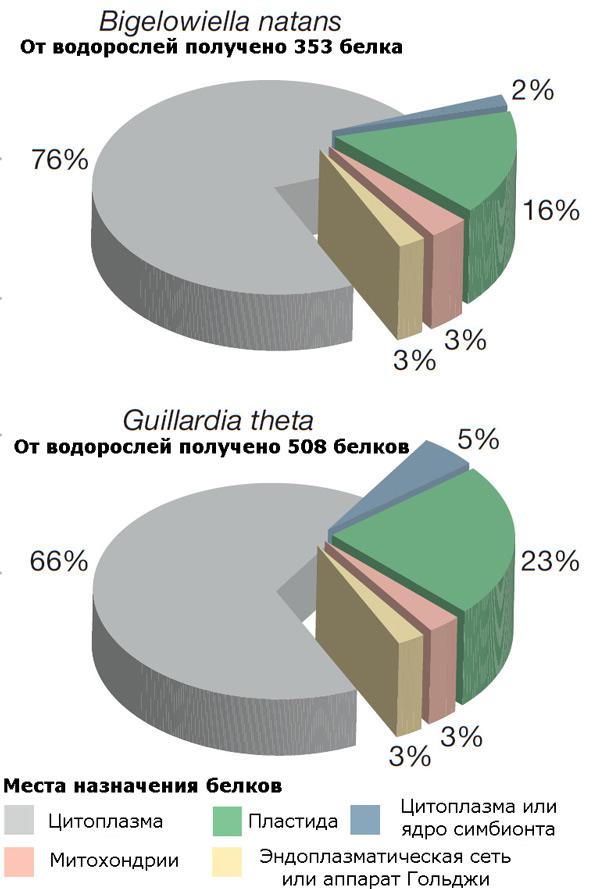 Белки водорослевого происхождения, гены которых обнаружены в ядерных геномах G. theta и B. natans
