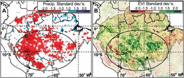 A— количество осадков вАмазонии летом 2005года. Цветовая шкала показывает величину отличия наблюдаемого количества осадков от среднего уровня за период с1998-го по 2006год (чем краснее, тем сильнее засуха). B— интенсивность фотосинтеза втот же период времени (чем зеленее, тем интенсивнее). Рис. из обсуждаемой статьи вScience