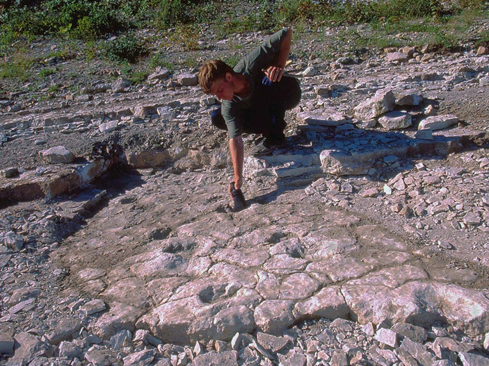 Пермские парарептилии сухонопусы ходили иноходью