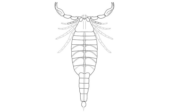 Обнаруженный в США древнейший скорпион, по-видимому, дышал воздухом