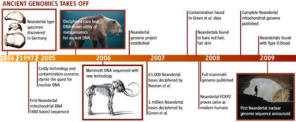 Важнейшие вехи в развитии палеогеномики. 1856— вГермании найден типовой экземпляр неандертальца. 1997— отсеквенирован первый фрагмент митохондриальной ДНК неандертальца. До 2005— дорогостоящие технологии и опасность загрязнений сдерживают попытки изучения ядерной ДНК. 2005— расшифровка ДНК пещерного медведя показывает полезность методов метагеномного анализа для палеогеномики. 2006— ДНК мамонта отсеквенирована при помощи новых технологий. 2006— начало проекта «геном неандертальца». 2006— две команды исследователей сообщают о прочтении 65000 и 1млн пар нуклеотидов неандертальского ядерного генома. 2007— вматериале команды Грина идр. обнаружены загрязнения. 2007— показано, что неандертальцы были рыжими и светлокожими. 2007— показано, что ген FOXP2 идентичен унеандертальца и современного человека. 2007— опубликован полный геном мамонта. 2008— опубликован полный митохондриальный геном неандертальца. 2008— показано, что унеандертальцев встречалась группа крови0. 2009— черновое прочтение ядерного генома неандертальца. Рис. из обсуждаемой статьи вScienceс