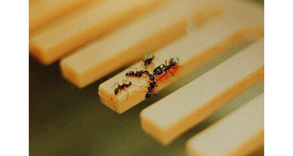Сироп на одном из зубьев «кормушки-расчески»: команда фуражиров успешно обнаружили требуемый зубец. Фото передано авторами обсуждаемой статьи в Behaviour