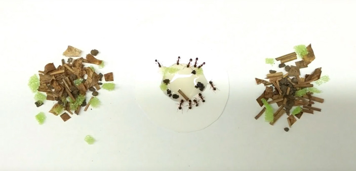 У муравьев афеногастеров орудиями труда пользуются только самые активные рабочие особи