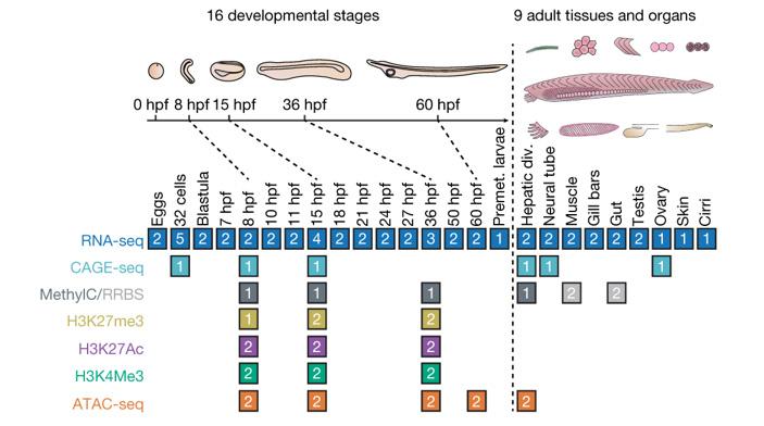 Рис. 2. Данные, использованные для функциональной аннотации генома ланцетника