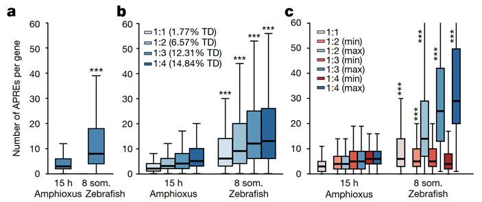 Рис. 4. Среднее число регуляторных элементов, приходящихся на один белок-кодирующий ген у ланцетника и рыбки данио-рерио