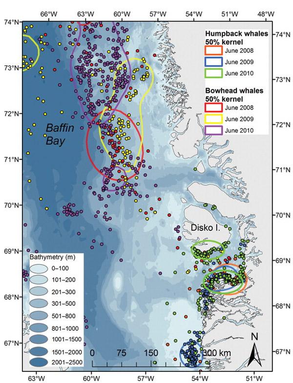 РРёСЃ. 4. Весенние миграции горбачей Рё гренРандских китов