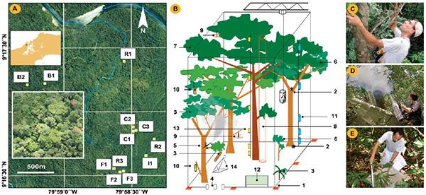 Расположение площадок, на которых непосредственно проводили учет беспозвоночных в районе Сан-Лоренцо (Панама)