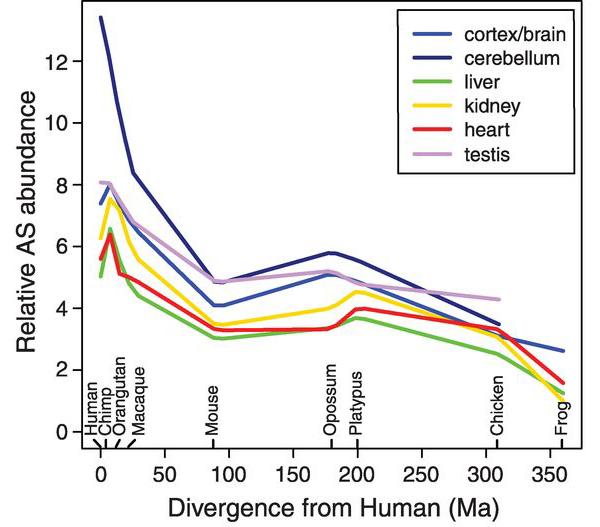 Частота случаев альтернативного сплайсинга в ортологичных генах у разных животных и человека по отношению к минимальному разнообразию