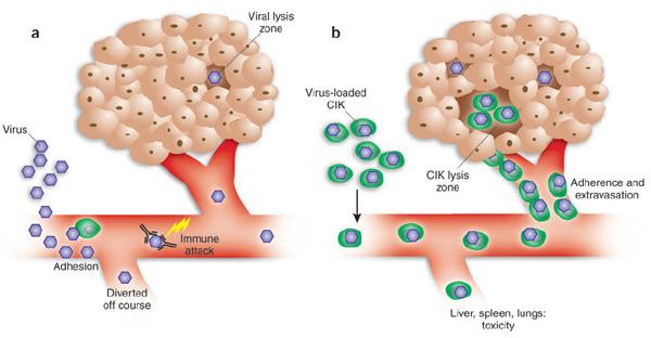 изменения иммунной системы при опухали: