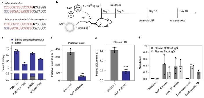 Рис. 5. Направленное нарушение работы гена PCSK9 у мышей