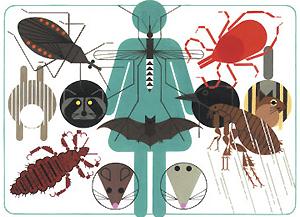 Переносчики инфекционных заболеваний человека