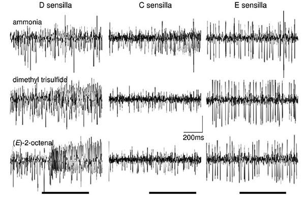 Примеры ответов одиночных рецепторных клеток, лежащих в основании разных типов ольфакторных рецепторов на антеннах постельного клопа
