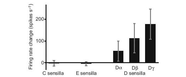 Усредненный ответ (число импульсов в секунду) ольфакторных рецепторов постельного клопа на суммарный запах человека