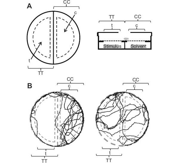 Вид ольфактометра и траектории ползающих по нему клопов
