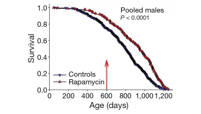 Рис. 2. Влияние рапамицина на выживаемость самцов мышей
