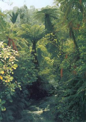 Биоразнообразие в биологии и энтропия в теории информации и термодинамике в сущности эквиваленты. Тропический лес со своим высочайшим видовым разнообразием имеет наибольшую энтропию: исследователь, гуляя по тропическим зарослям, не может предсказать, какое растение он встретит следующим. (Фото с сайта www.masmol.com)