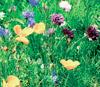 Биоразнообразие полезно для здоровья
