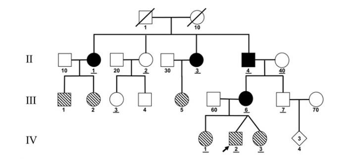 Рис. 2. Генеалогическое древо пациента А
