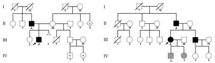 Рис. 3. Генеалогические деревья пациентов В и С