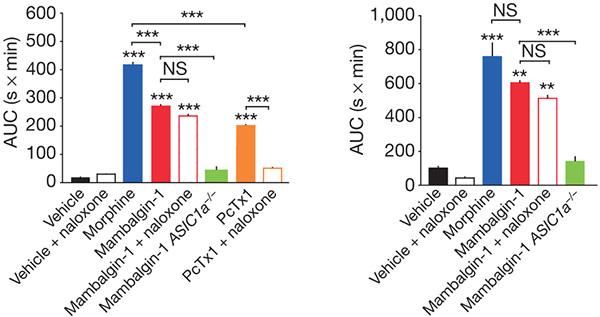 На гистограммах показана скорость реакции мышей на болевые стимулы (слева— одергивание хвостика, справа— лапки). Чем выше столбик, тем дольше мышь переносит болевой стимул