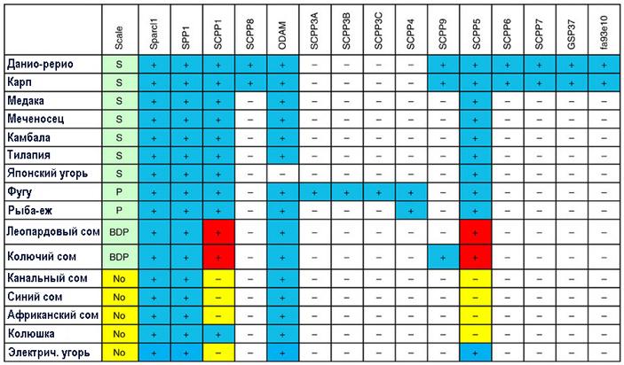 Данные о наличии в геномах рыб рабочих генов семейства SCPP