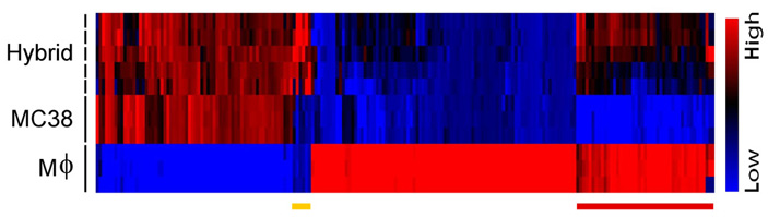 Рис. 3. Экспрессия генов вгибриде