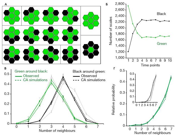 Рис. 3. Анализ применимости модели клеточного автомата к окраске глазчатой ящерицы