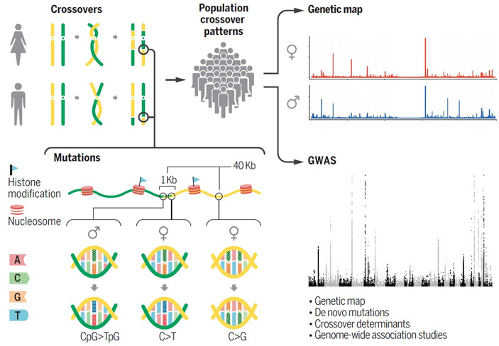 Схема работы по исследованию частот и локализации сайтов мутации и рекомбинации
