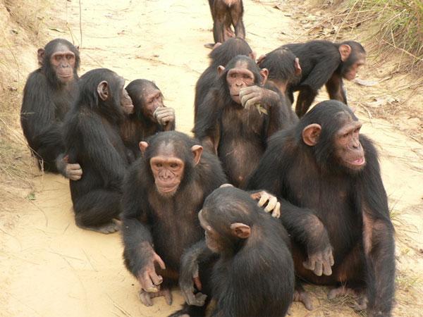 Секс с самкой обезьяны
