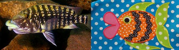 Самые наглядные примеры параллельной эволюции можно увидеть среди пресноводных цихлид