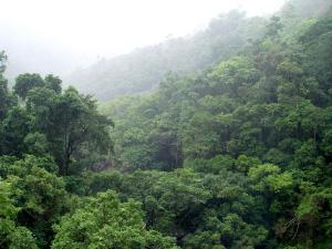 Дождевой тропический лес в Австралии (фото с сайта virtual.yosemite.cc.ca.us)