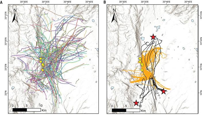 Летучие собаки ориентируются при помощи когнитивных карт