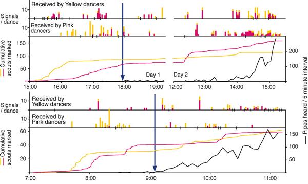 Распределение стоп-сигналов в процессе выбора роем места для поселения