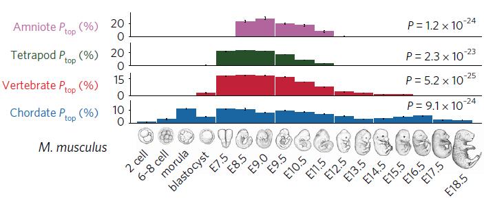 Рис. 3. Графики, показывающие степень сходства экспрессии генов на разных стадиях развития мышиного эмбриона сдругими представителями амниот, тетрапод, позвоночных и хордовых