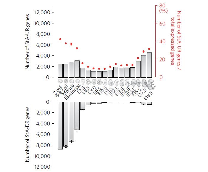 Рис. 4. Число генов, экспрессия которых достоверно повышена (верхний график) или понижена (нижний график) на разных стадиях развития мышиного эмбриона