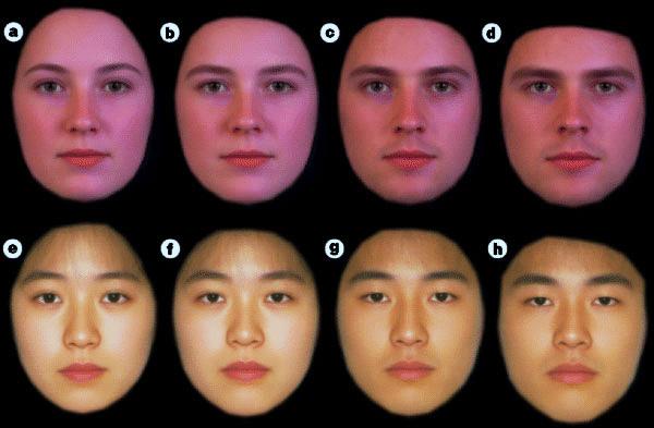 Рис.1. Женские (два левых) и мужские (два правых) лица европеоидной (вверху) и монголоидной (внизу) расы сусиленными на компьютере женскими (вкаждой паре— левое) и мужскими (вкаждой паре— правое) чертами. Фото из статьи: Perrett etal. Effects of sexual dimorphism on facial attractiveness// Nature. 1998. V.394. P.884–887