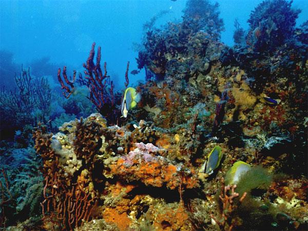 Здоровые коралловые рифы
