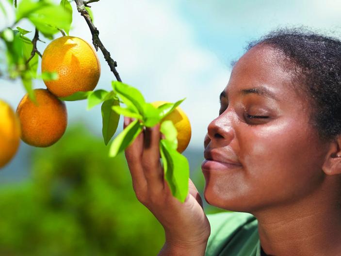 Почему лимон и апельсин пахнут похоже