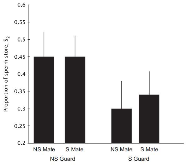 Рис.2. Относительный вклад спермы второго самца, скоторым копулировала самка. Сперма второго самца составляла почти половину отвсей спермы всперматеке, если после второй копуляции самку охранял неродственный самец (NS Guard), но этой спермы было достоверно меньше, если самку охранял брат (S Guard)