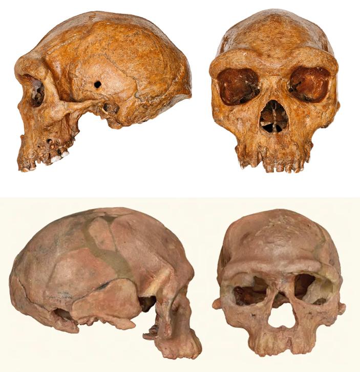 Гейдельбергские люди жили вАфрике одновременно сранними сапиенсами