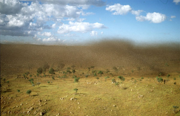 Стая пустынной саранчи на Мадагаскаре. Фото ©M.Lecoq, CIRAD, с сайта www.cnes.fr