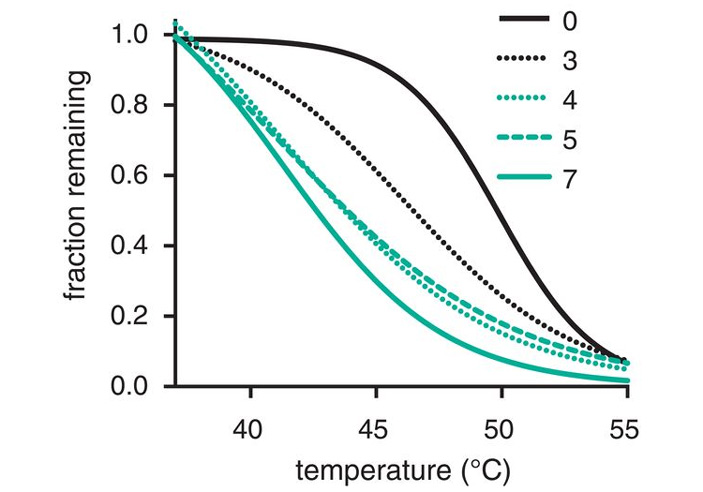 Рис. 2. Термоустойчивость вирусных частиц с разными генотипами
