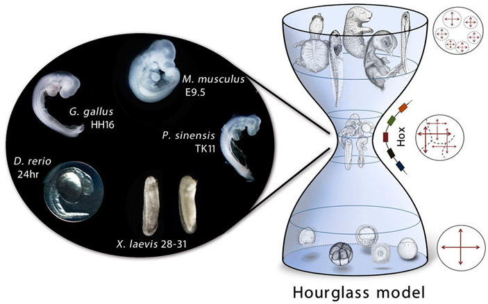 https://elementy.ru/images/news/developmental_constraints_shape_the_evolution_of_nematoda_2_703.jpg