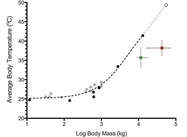 Зависимость средней температуры тела (°C по вертикали) от массы тела (кг, логарифмическая шкала) для выборки современных крокодилов (светло-серые кружочки) и динозавров. По: GilloolyJ.F. etal., 2006 cдобавлением. Из статьи: Eagle R.A. et al., 2010