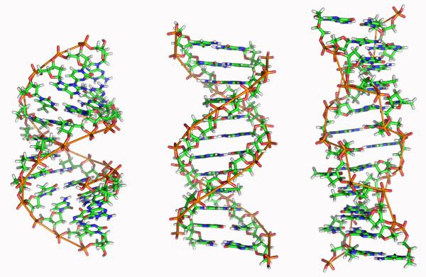 Рис.2. Формы ДНК (слева направо): A,BиZ
