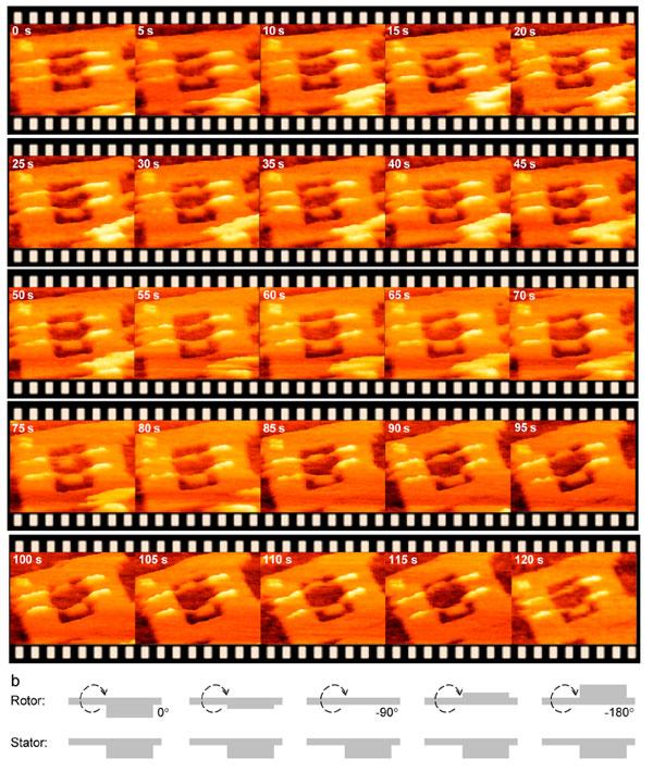 Рис.5. Изображения, полученные при помощи высокоскоростной атомной силовой микроскопии