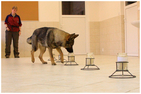Нюх собаки исключительно острый